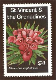 Elleanthus cephalotus stamp photo by Ron Smart
