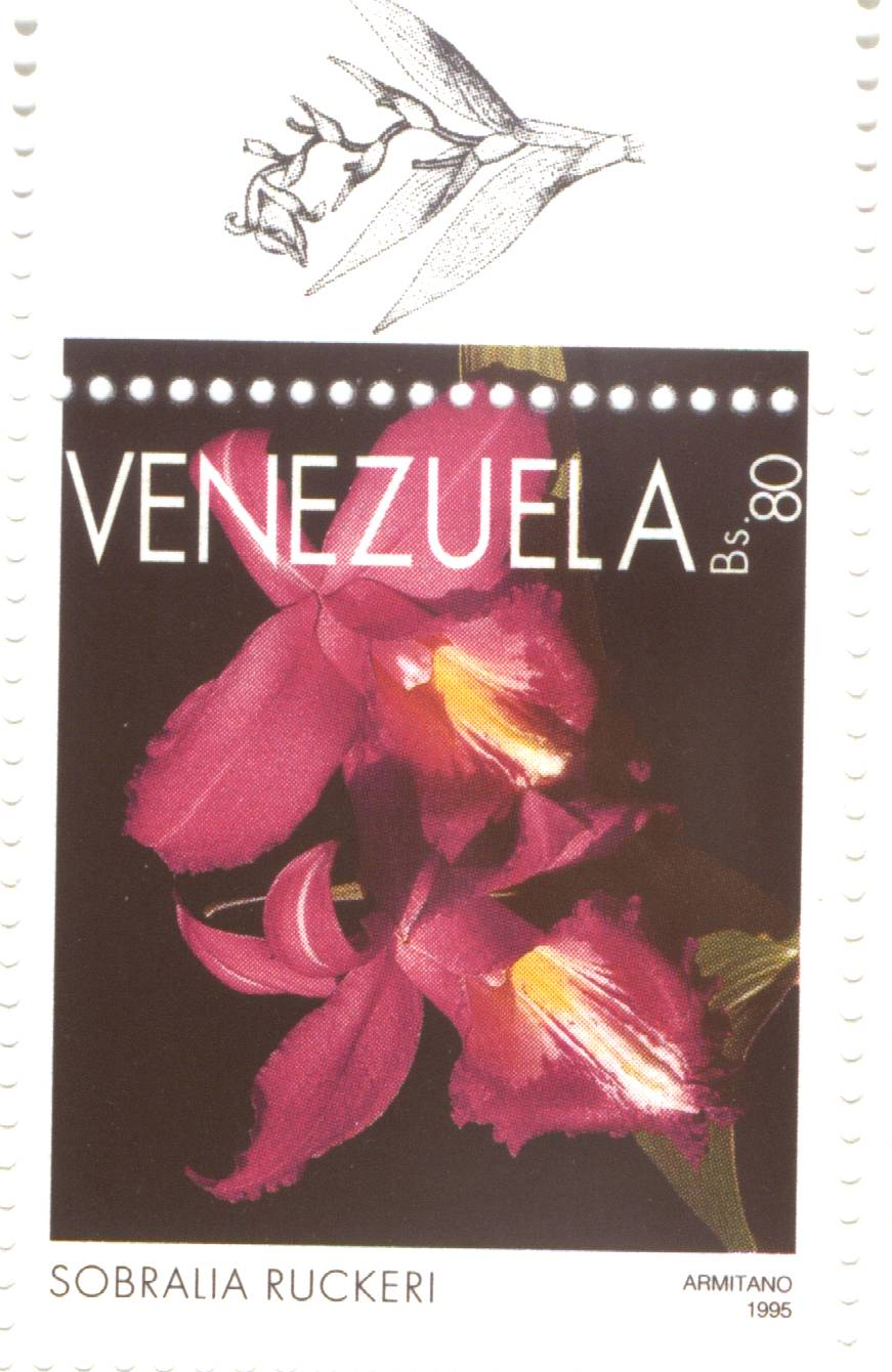 Sobralia ruckeri on Venezuelan stamp