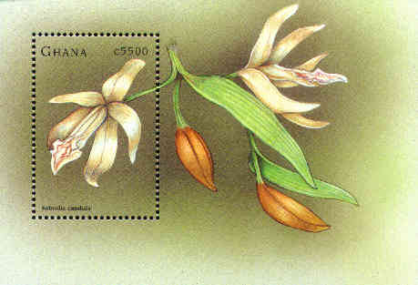 Stamp labeled Sobralia candida from Ghana, issued June 1998, probably a Vanilla sp.